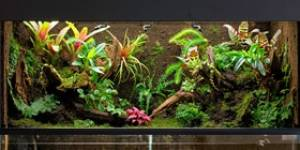 Build a Terrarium and Have a Miniature World in Your Home | Kudos